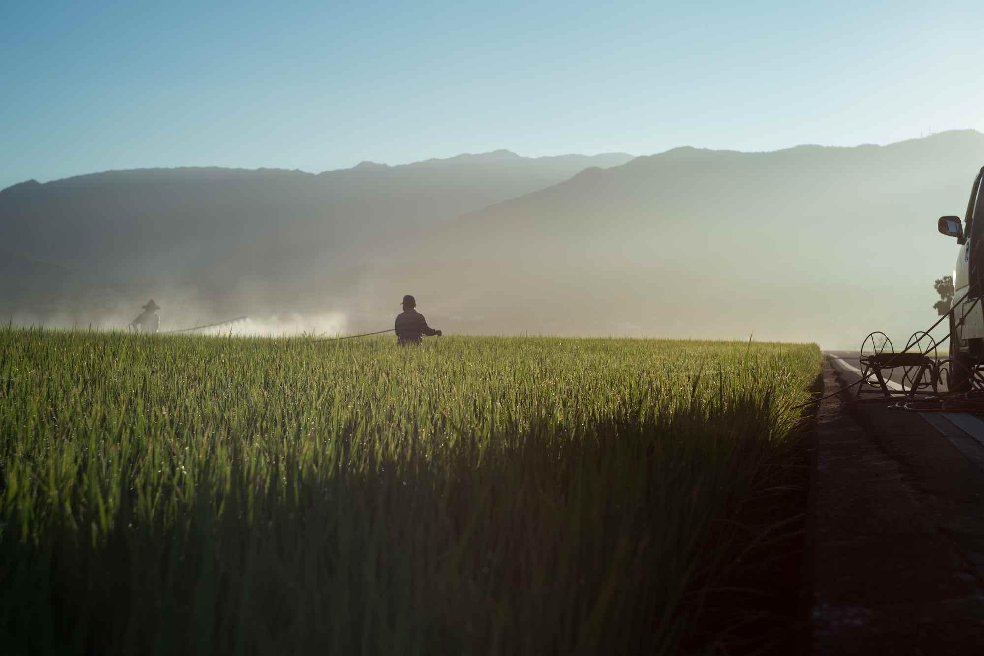 Sylwetka osoby na polu trawy