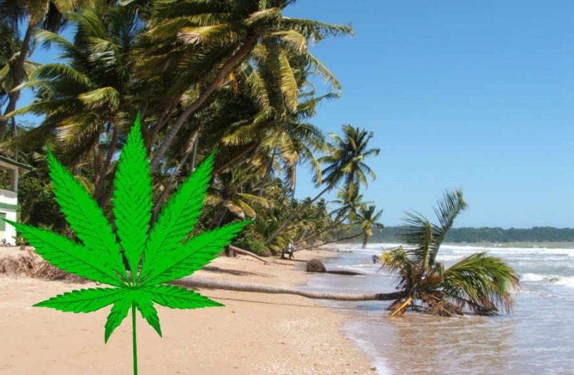 Trinidad Tobago legalizacja marihuany
