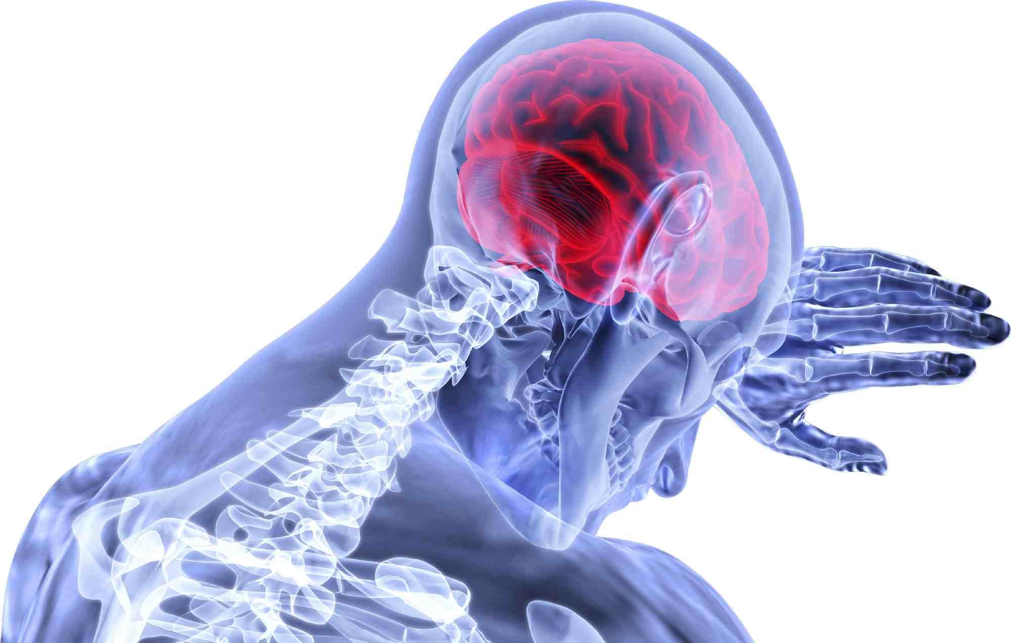 Grafika przedstawiająca system nerwowy i mózg