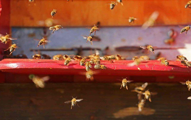 Latające pszczoły