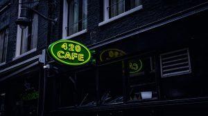 Nowe odmiany marihuany medycznej dla holenderskich pacjentów