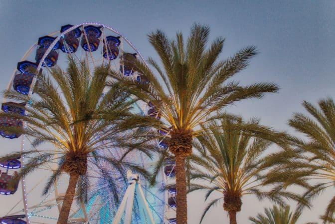 Palmy w Kalifornii