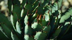 Meksyk krytykowany za nową ustawę dotyczącą konopi