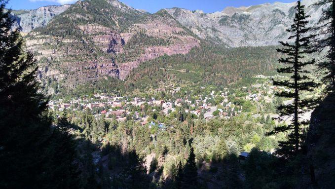 Drzewa w górach Kolorado