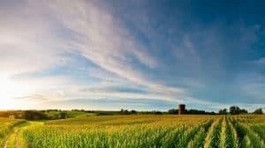 Licencje na uprawy konopi w stanach Georgia i Iowa już możliwe