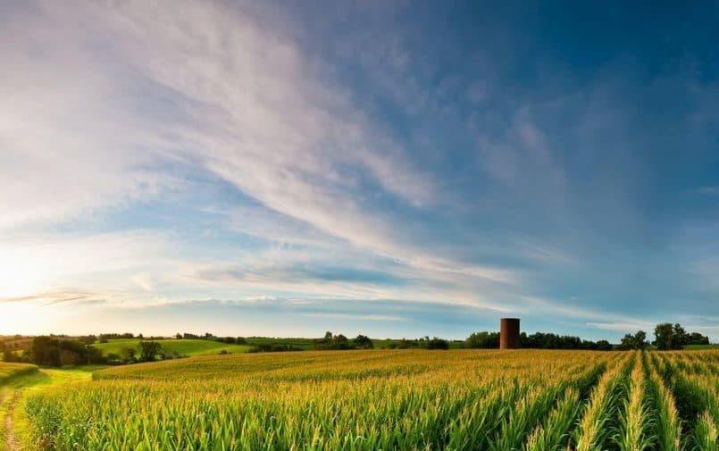 Pola uprawne w Iowa