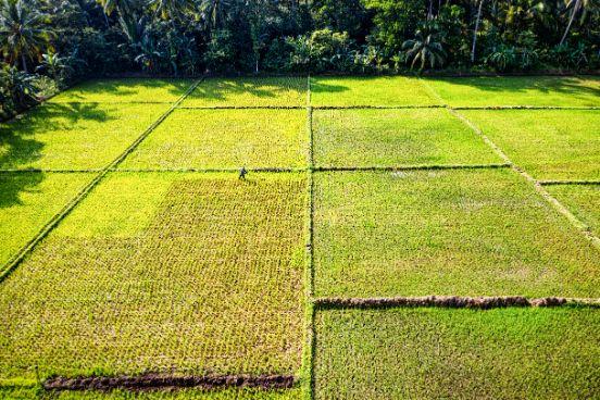 Zdjęcie zielonych pól z powietrza