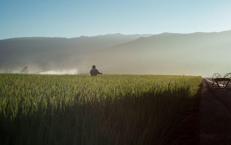 Rolnik pracujący na zielonym polu