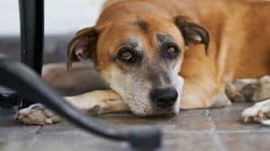 Dlaczego olej CBD dla zwierząt domowych to niesamowity przełom?