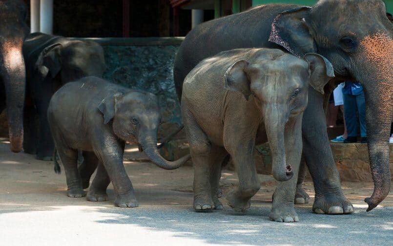 Pięć słoni
