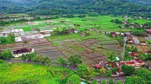 Indonezja odrzuca oznaczenie konopi indyjskiej jako