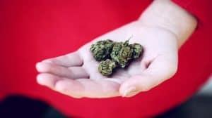 Polska komisja ds. medycznej marihuany - szykuje się rewolucja?