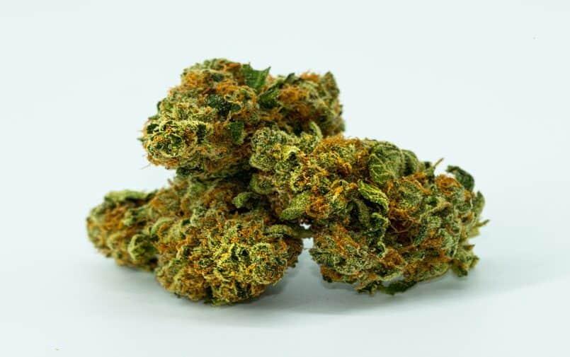 konopie marihuana