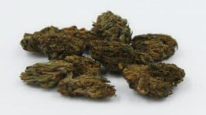 Nadchodzi legalizacja marihuany w Polsce?