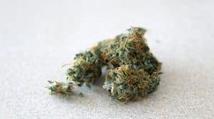 Niebezpieczeństwa związane ze spożywaniem marihuany