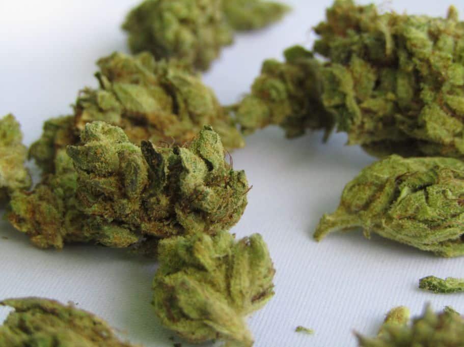 Marihuana susz